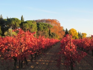 spectacular Autumn in the Minervois