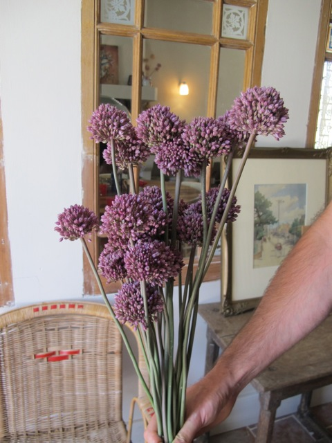 wild leek flowers - allium ampeloprasum