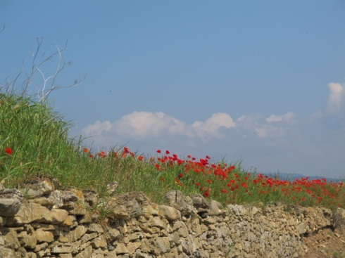poppies and wall... again!