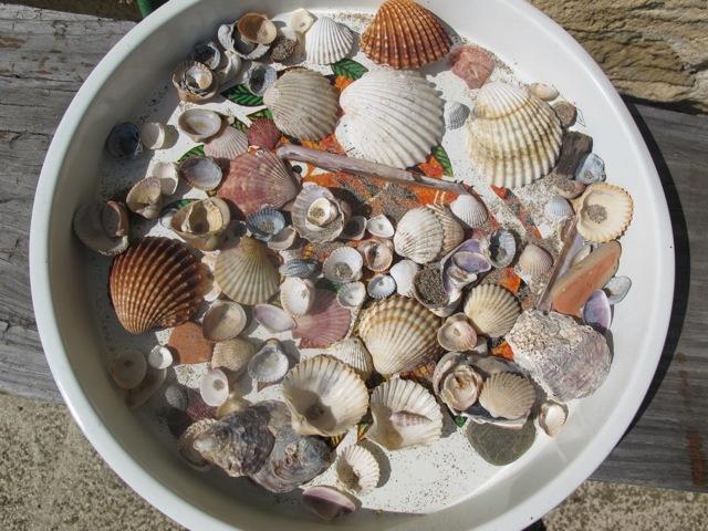 shells from La Clape