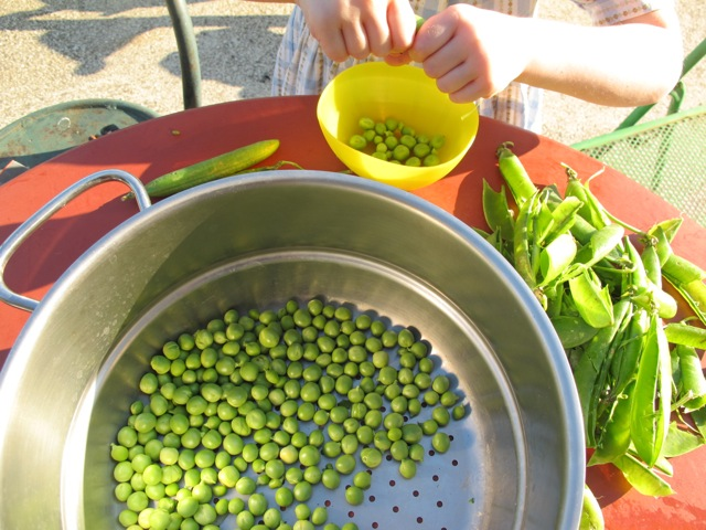 Lilas shelling peas for Mum