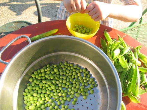 Lilas shelling peas for Mum