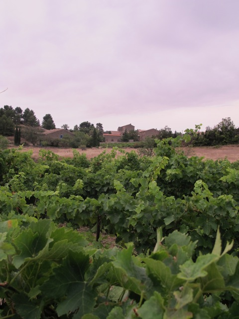 Minervois in the morning