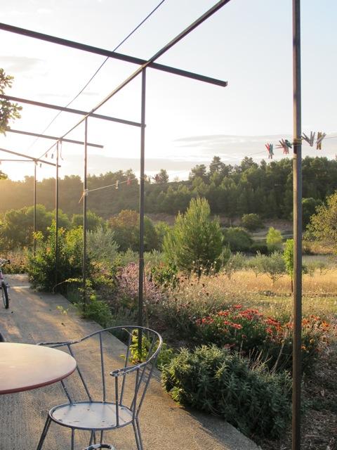our garden this morning