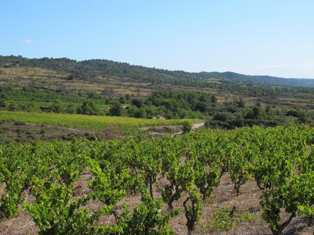 happy vines in the region