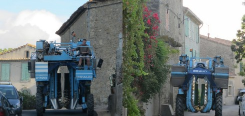 storming the vllage for grapes!