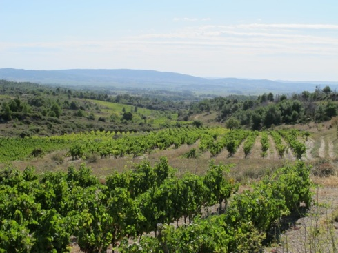 Minervois vineyards