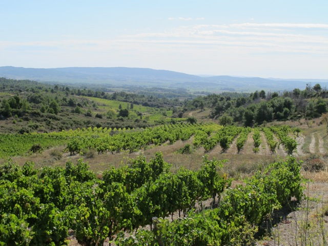 Minervois vineyards