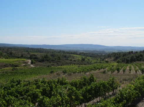 happy vines in the Minervois