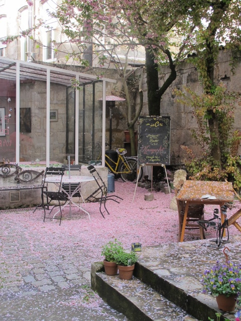 blossom in cafe courtyard