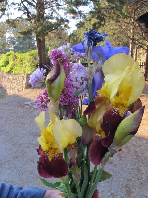 bouquet de bruno