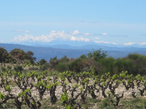 vines with Pyrenees in background