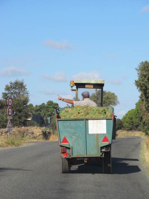 following a tractor during the harvest