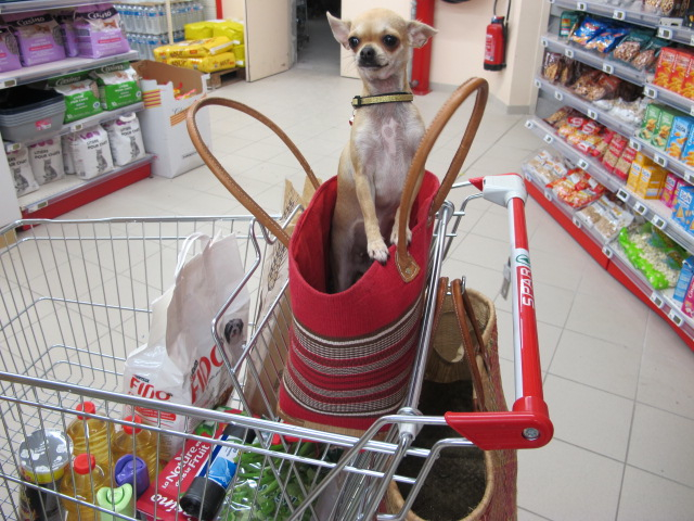 dog in the supermarche