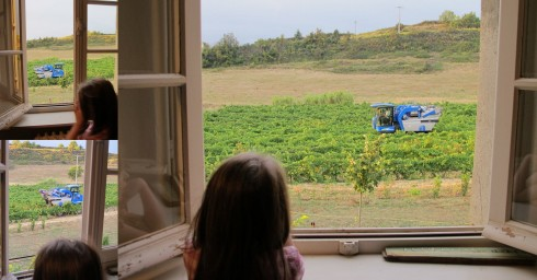 lilas watching the harvester