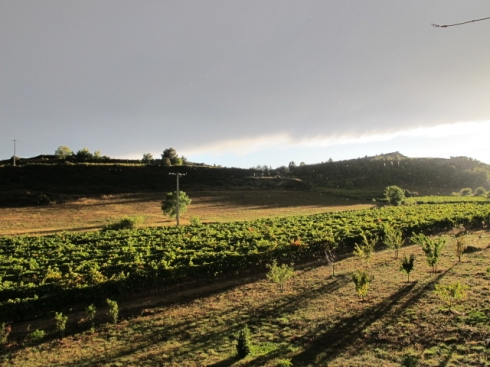 sun over our vines
