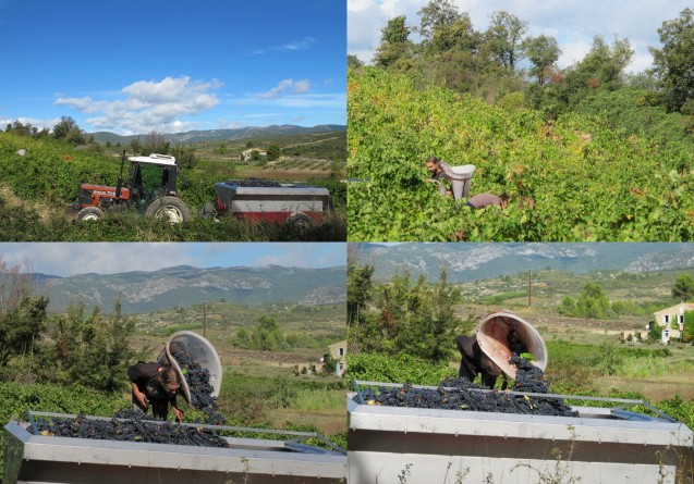 the neighbouring vigneron's pickers