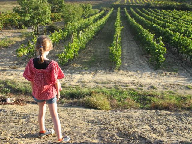 vineyards in Calamiac