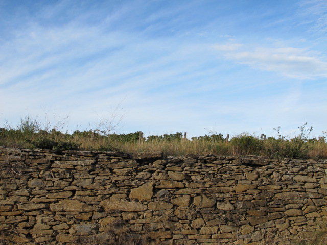 dry stone wall and vines