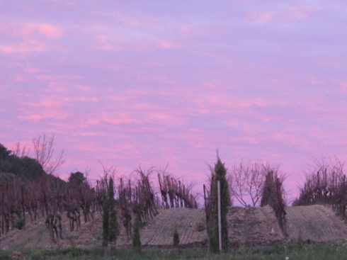 pink over the vines at the back