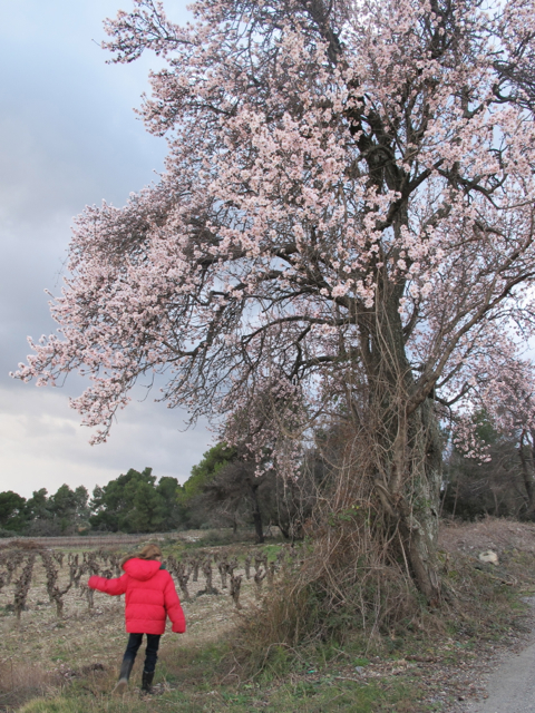 lilas blossom 3