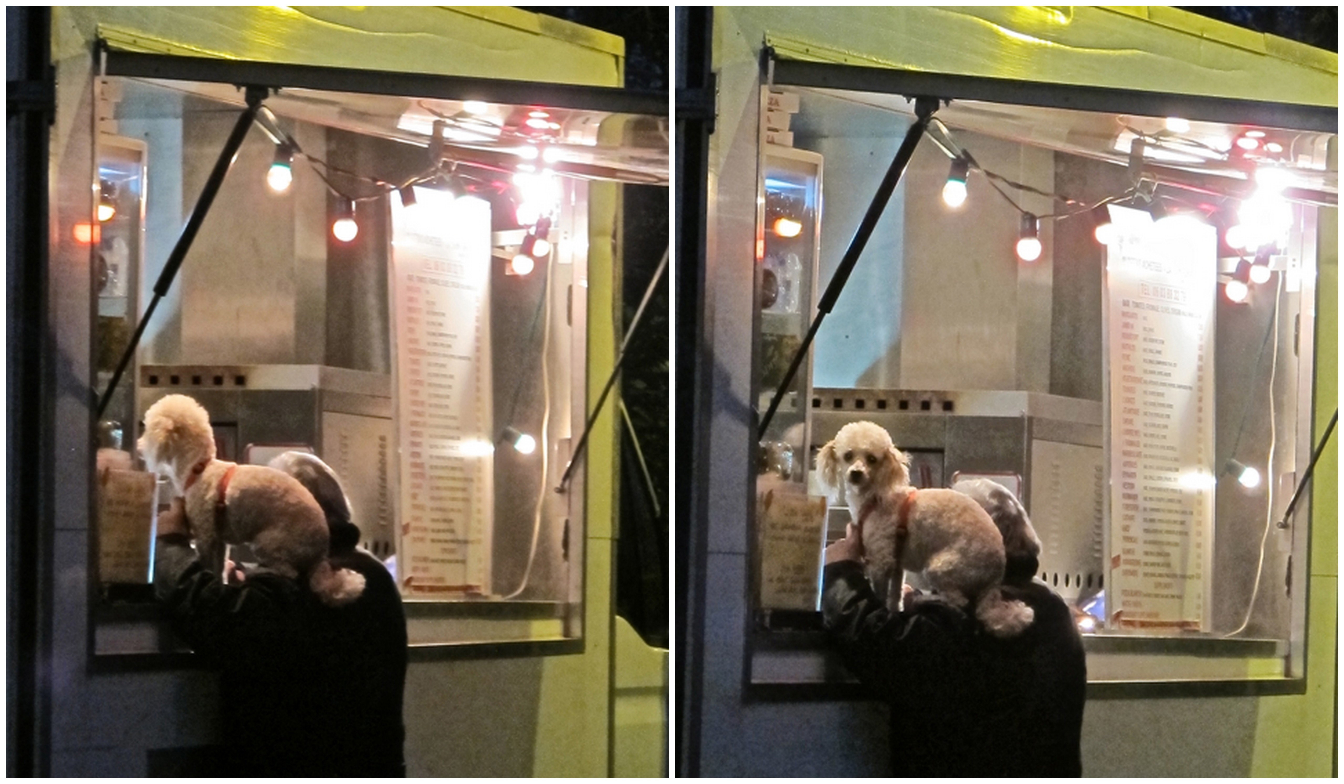 Sunday night and pooch is hangin' at the pizza van