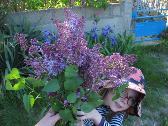 Lilas and lilas