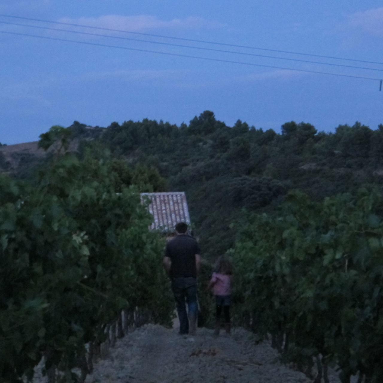 grape walk