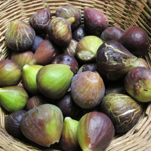 some home-picked figs