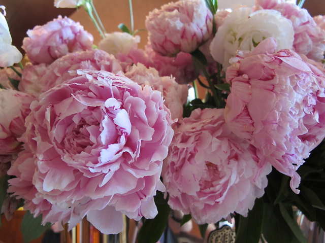 peonies for you