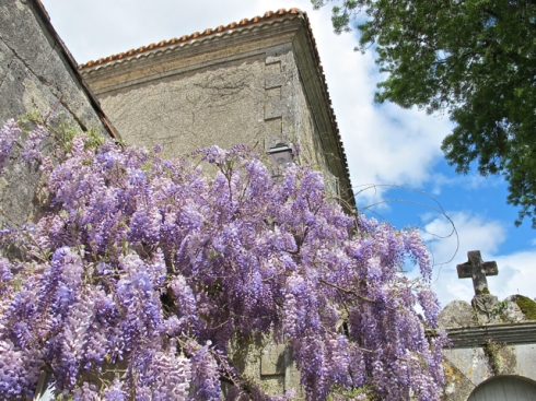 a sniff of wisteria