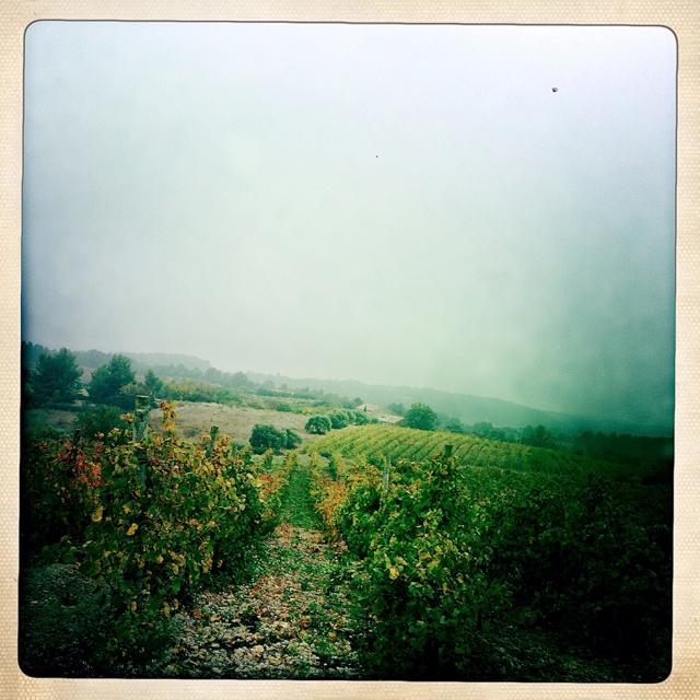 Autumn vines 2