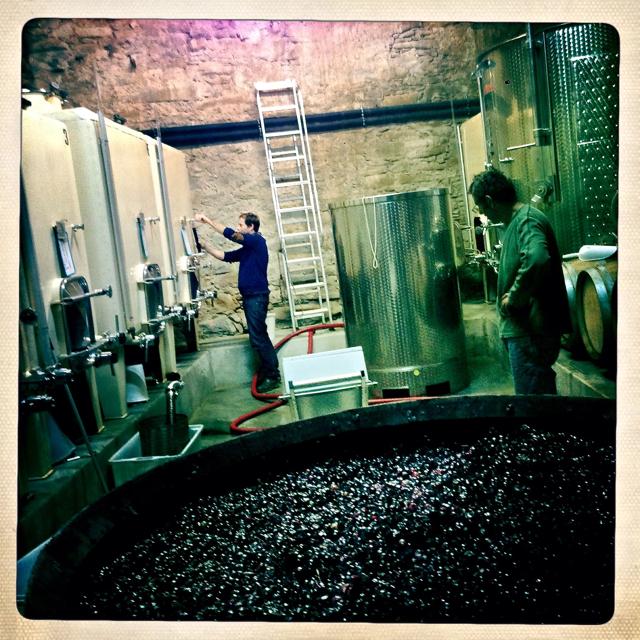 Benji in the cellar