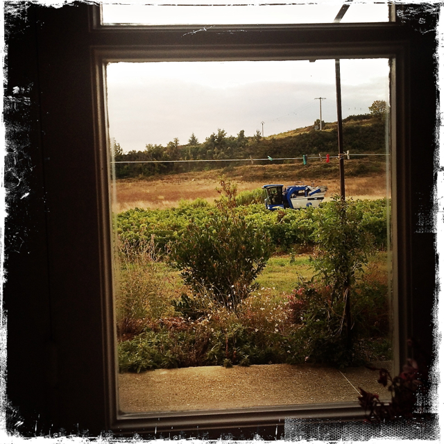 woke to to the noise of the harvester outside the kitchen window